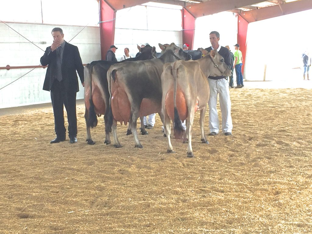 The Senior Champion class was tough, but Daloris's aged cow was so tall Dale couldn't see over her.